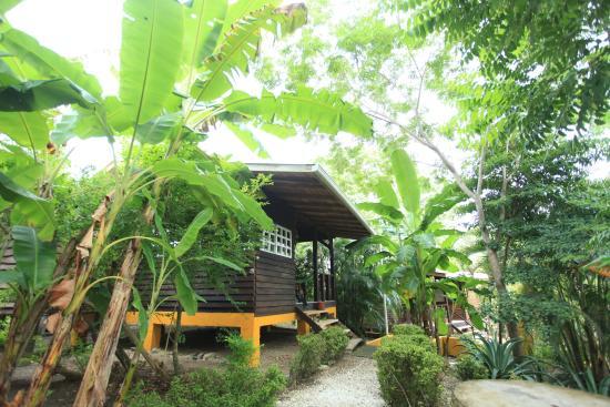 Zopilote Surfcamp: garden bungalow