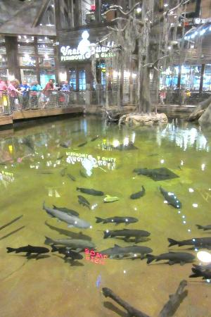 fish galore picture of bass pro shops at the pyramid