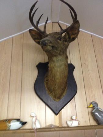 Cochranville, PA: deer head