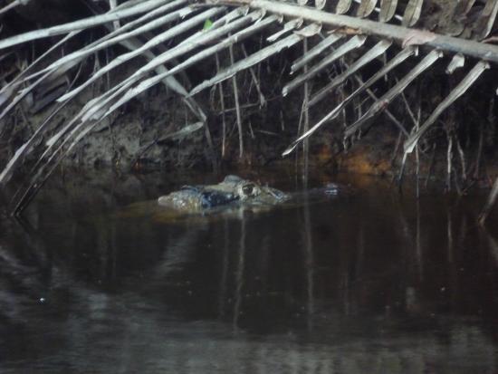Napo Wildlife Centre: Biodiversidad
