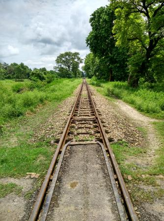 Bahraich, Indien: The train passes through the wildlife park