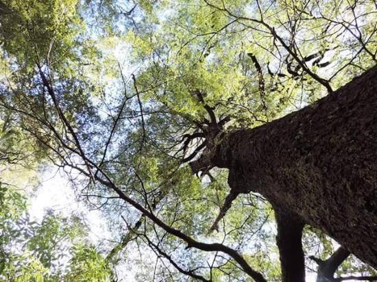Nelson-Tasman Region, Νέα Ζηλανδία: Towering trees on the beautiful walks