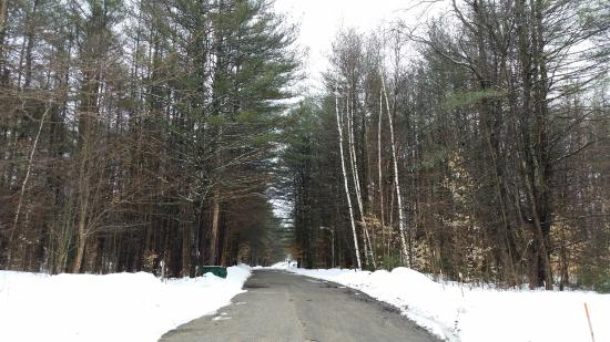 Cold Spring Resort: View of the road leading to our unit