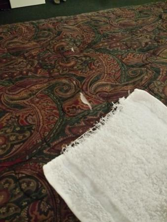 Cedars Inn Enumclaw: Tattered towel and torn bedspread at this hotel
