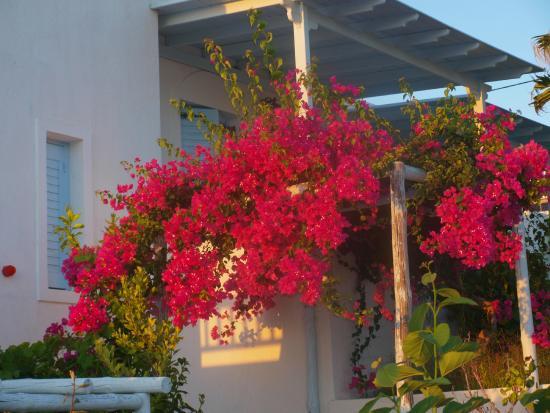 Hotel Pirgos Stelida: χρωματα απο τα λουλουδια σε ολο το ξενοδοχειο