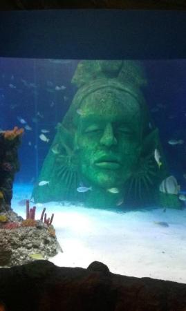 Sea Life Manchester: Aquarium