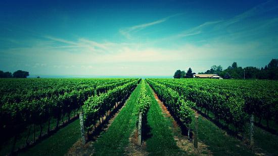 Niagara Grape & Wine Tours : Great day