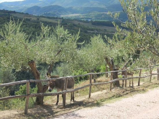 Agriturismo Ampugnano: i due ciucchini recitati