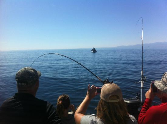 Charter fishing from orcas island in the san juan islands for San juan fishing charters