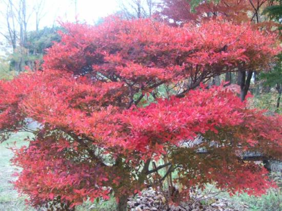 Hattori Ryokuchi Toshi Ryokka Botanical Garden