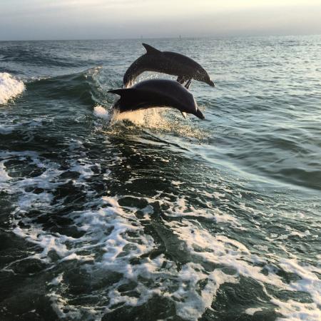 Little Toot Dolphin Adventures: Amazing! Amazing! Amazing!
