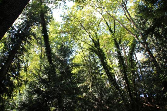 Nanaimo, Canadá: Nice tall shady trees