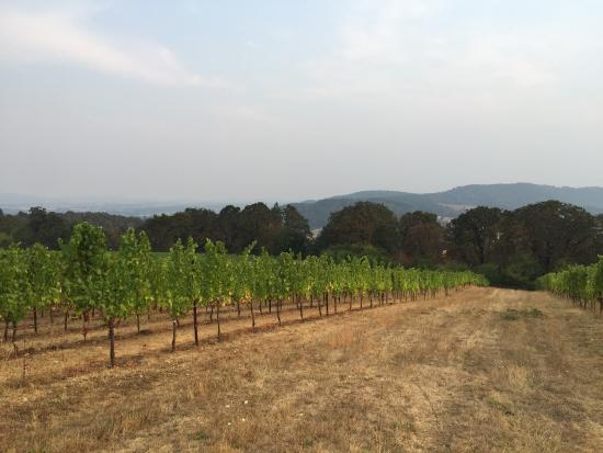 Perfect spot for Oregon wine country experience