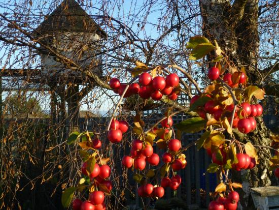Aggie's Bed and Breakfast: The dove cote vewied through the ruby red crab apples.