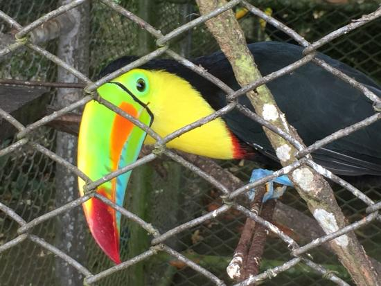 Toucan Rescue Ranch: Friendly Toucan