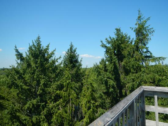 A Giant Tingle Forest View From A Tree Top Walk Bridge Stock Photo ...