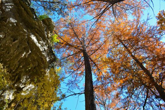 Westcave Outdoor Discovery Center : Gorgeous colors of fall