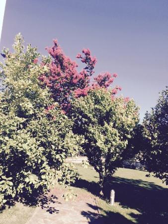 Maison Beltzenia : Le jardin