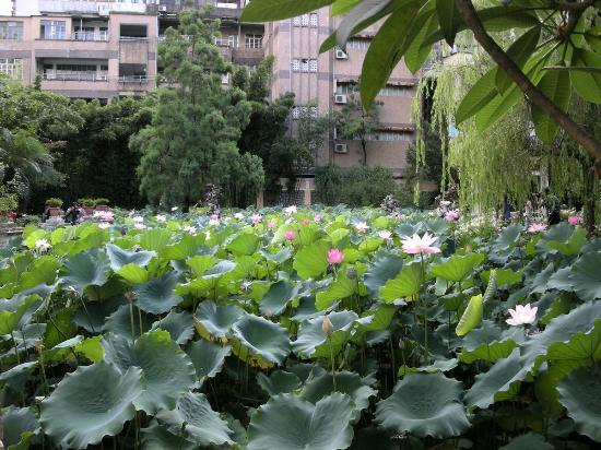 Lou Lim Ieoc Garden: 蓮池
