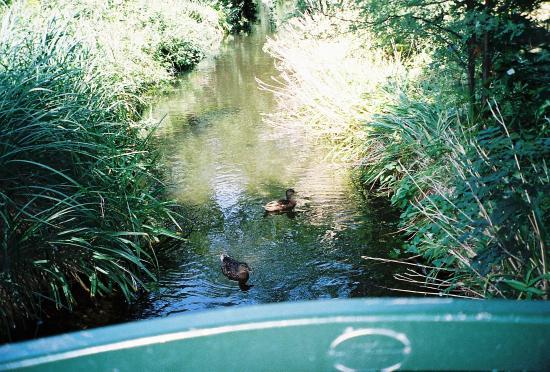 Petit pont picture of jardin d 39 acclimatation paris - Pavillon des oiseaux jardin d acclimatation ...