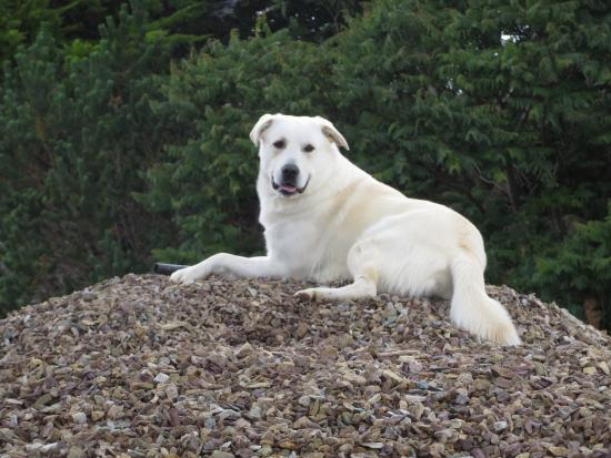 Rigney's Farmhouse Bed & Breakfast: Chief, our greeter