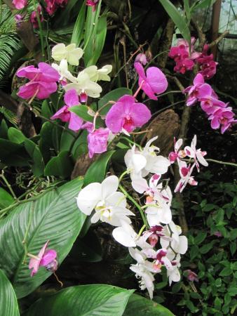 Saint-Cyr-en-Talmondais, Francia: Des orchidées magnifiques