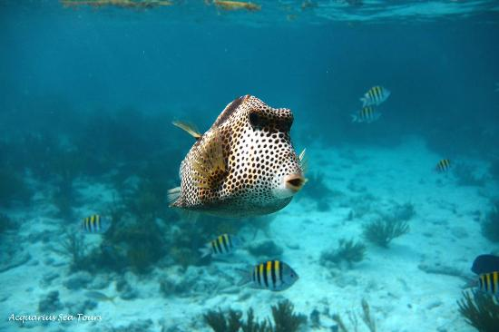 Acquarius Sea Tours Snorkel Grand Cayman
