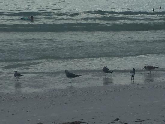 Club Regency of Marco Island : birds of all types