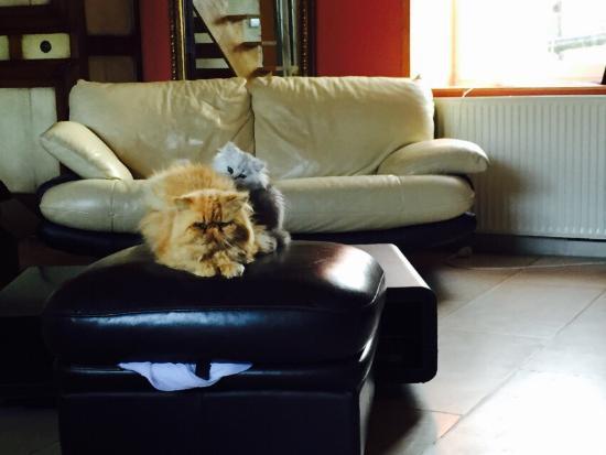 Saonnet, Франция: La nostra camera sottotetto e gli splendi gatti...un paradiso