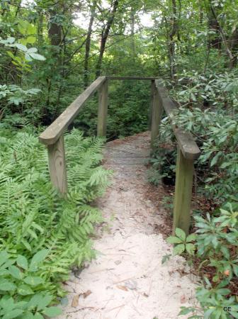 Rittenhouse Motor Lodge : Trail