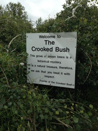 Radisson, Kanada: The Crooked Bush