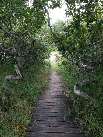Radisson, Kanada: Boardwalk through the bush