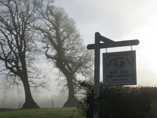 Yellingham Farm: Morning