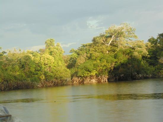 San Pedro Lodge: Río en el que está el lodge