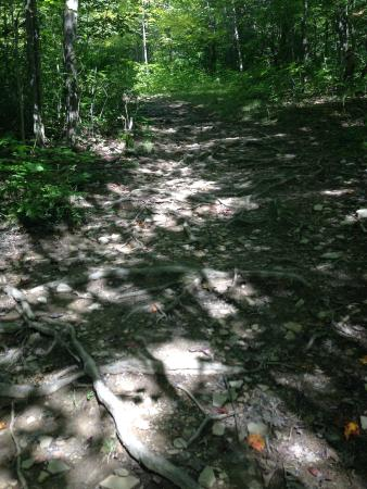 Griffis Sculpture Park: hiking