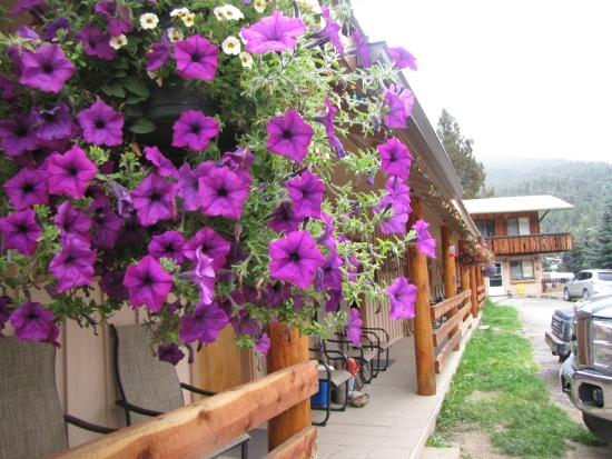 Arrowhead Lodge: Beautiful flowers on the porch