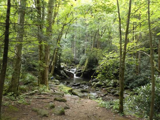 Roaring Fork Motor Nature Trail In Gatlinburg August 2015