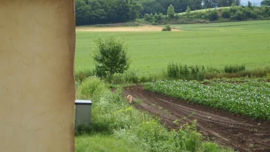 朝見たキツネの後ろ姿 - 美瑛町、スプウン谷のザワザワ村の写真 ...
