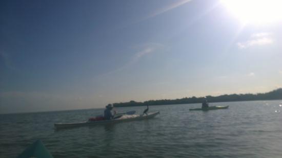 Adventure Sea Kayak : Carl the cormorant hitching a ride!