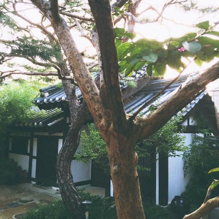 Rakkojae Seoul: Morning light with sparrows singing. So peaceful.