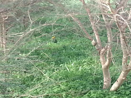 Ex-Tee Crystal Hotel : A weaverbird building a nest outside my window.