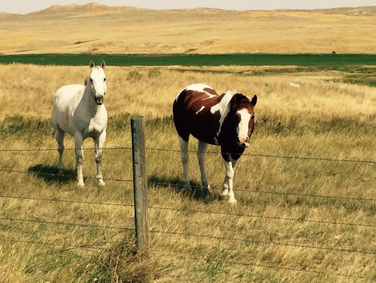 The TA Guest Ranch: Horses