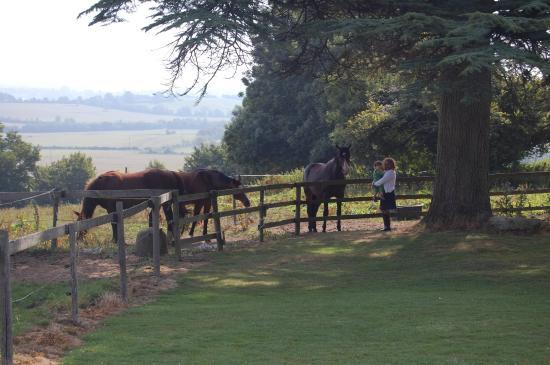 Saint-Leonard-des-Parcs, Prancis: Petting the horses