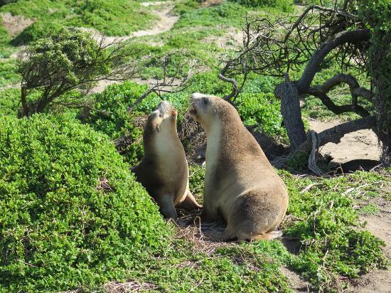 Seal Bay照片
