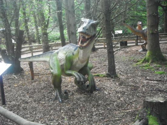 Wellington Country Park: Rarrr!!