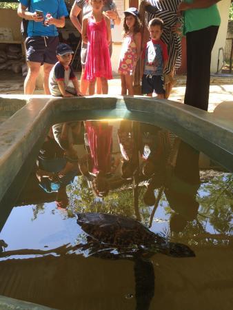 Watamu Turtle Watch: photo0.jpg