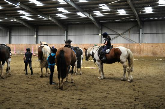 Stunning Horses Picture Of Kinsale Equestrian Centre