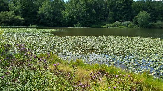 Pennington, NJ: Another View of Willow Pond with its Many Pods
