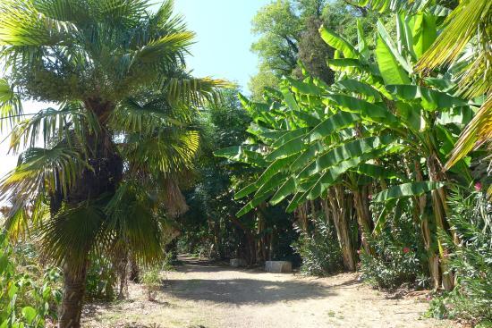 All e de bananiers photo de jardin exotique la roque - Photo jardin exotique ...