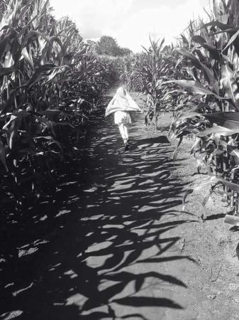 Reaseheath Maize Maze: my superhero
